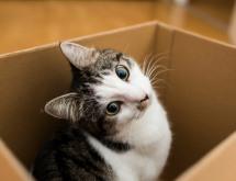 cute cat in the box