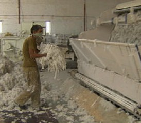Indian Worker Handling Asbestos
