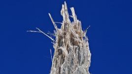 Raw anthophyllite asbestos
