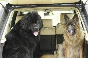 Mesothelioma Cancer Patients Pets