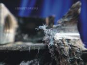 Crocidolite (blue asbestos) is visible in a circuit breaker.