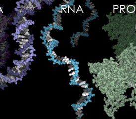 Illustration of DNA and RNA proteins