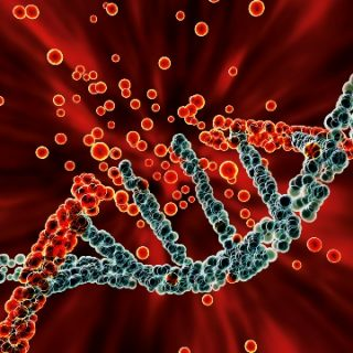 Colorful DNA ladder with broken strand