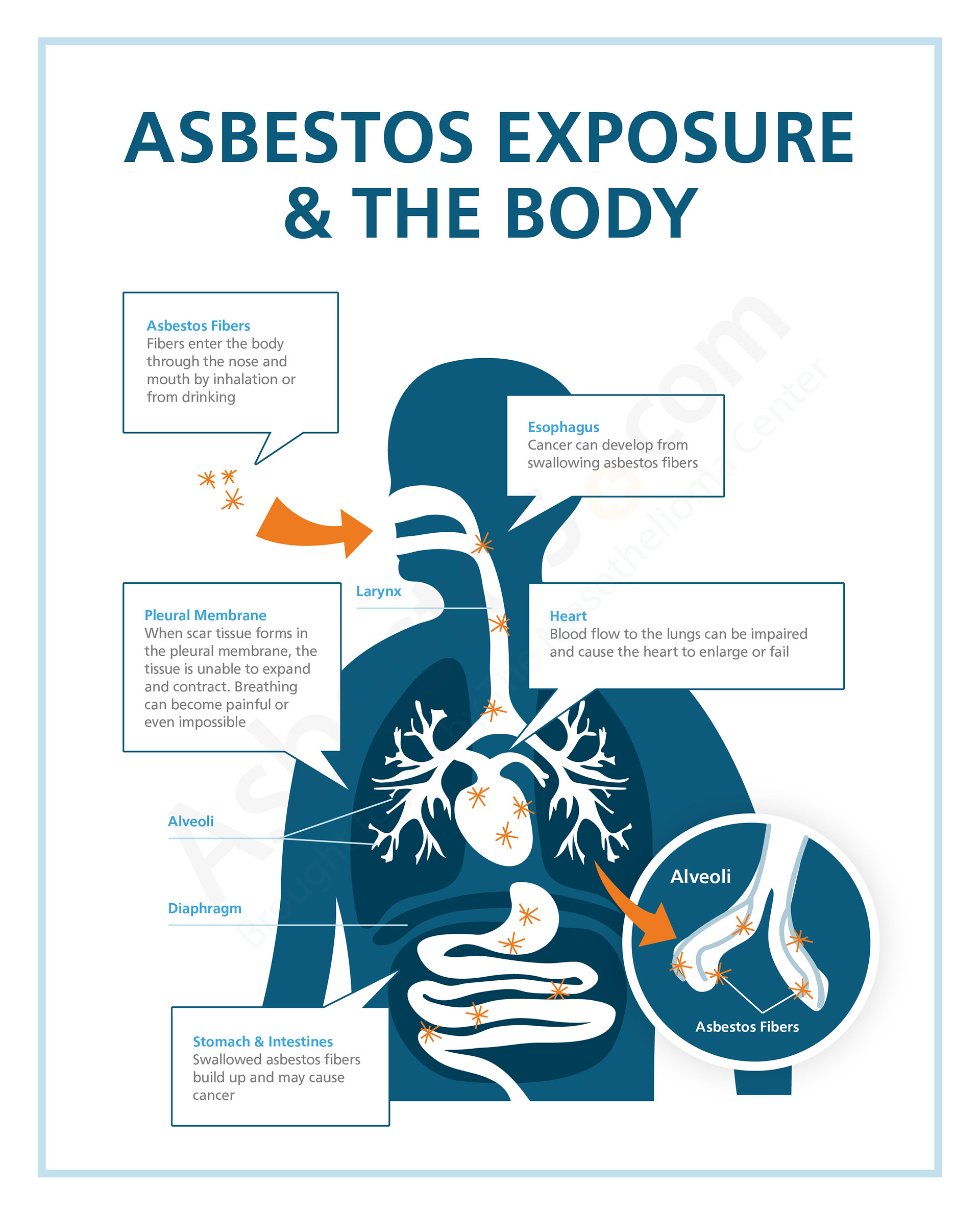 a report on asbestos and its effects on our health The negative health effects of asbestos are decided to do its own asbestos testing at an of precious resources and pollution that threatens our health.