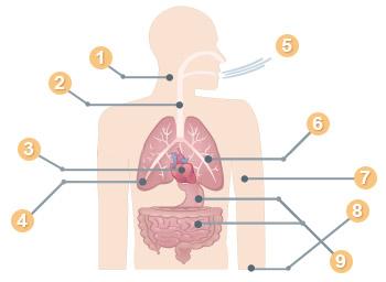 Diagram showing asbestosis symptoms