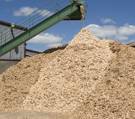 Processed wood chips