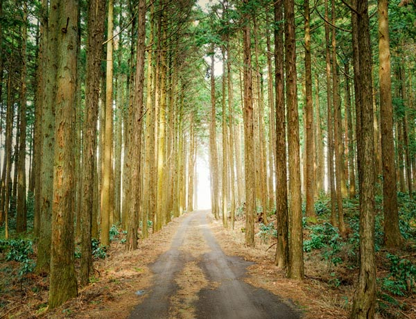 Forest Bathing For Mesothelioma Breathing Natural Medicine