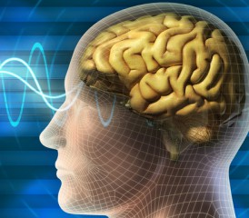 Magnetic Wages going Through a Brain