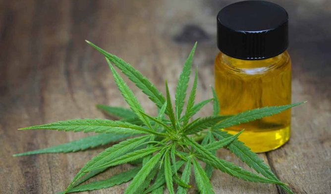 Marijuana leaf and bottle of oil