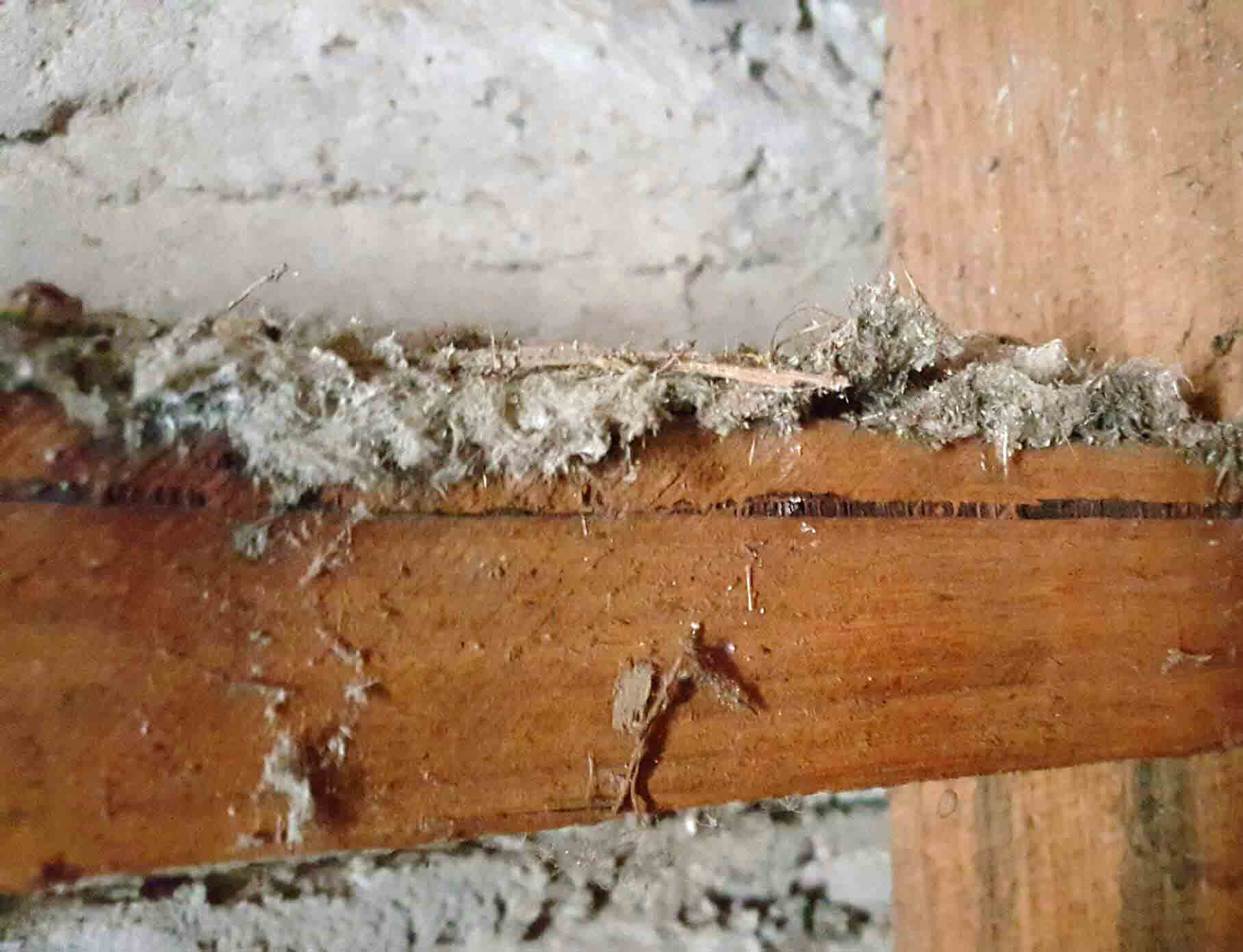 Mr. Fluffy asbestos insulation behind a wall on a wooden beam
