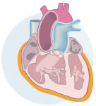 Pericardial Heart Icon