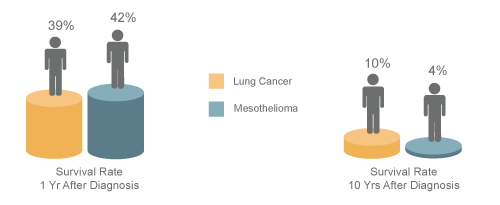 Survival Rates for Lung Cancer & Mesothelioma Patients