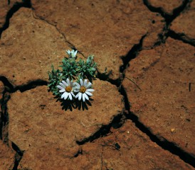 Flowers growing in a tough place
