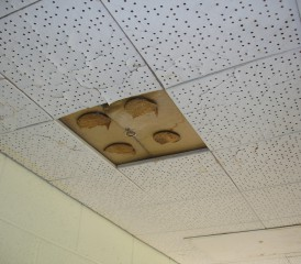 Asbestos in ceiling tile