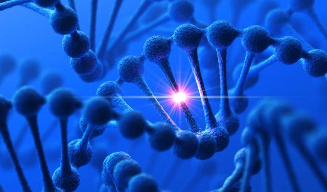 DNA modification