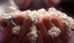Hands holding asbestos fibers