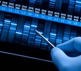 Examining DNA sequence
