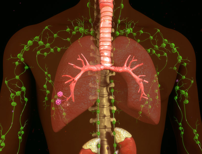 Lymphatic system around lungs