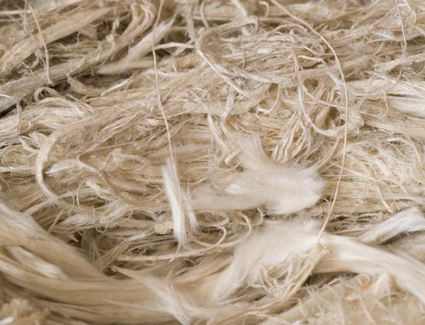 Natural asbestos fibers