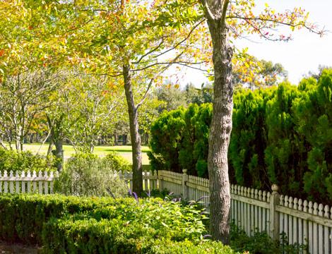 Trees in backyard